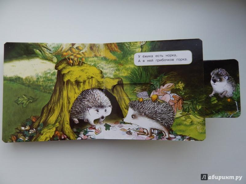 Иллюстрация 37 из 48 для Что у мишки на обед? - Юлия Шигарова | Лабиринт - книги. Источник: Мелкова  Оксана