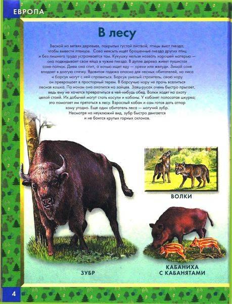 Иллюстрация 1 из 22 для Большая книга животных: Словарь в картинках | Лабиринт - книги. Источник: Юта