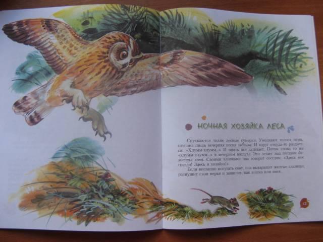 Иллюстрация 22 из 25 для Кто барабанит в лесу? Книга для чтения детям - Александр Тамбиев   Лабиринт - книги. Источник: varta