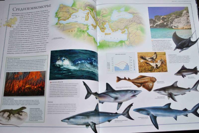 Иллюстрация 46 из 88 для Животный мир. Иллюстрированный атлас - Бамбарадения, Вудрафф, Гинзберг | Лабиринт - книги. Источник: Тамар@