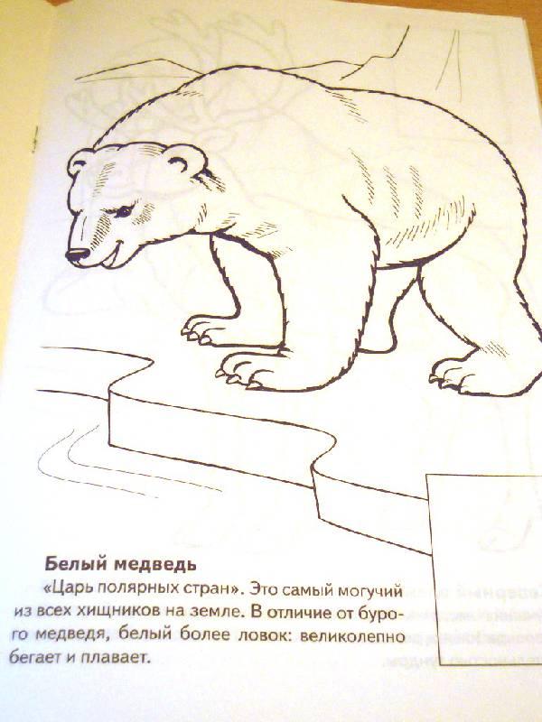 рисунки животных которые занесены в красную книгу россии того, производители