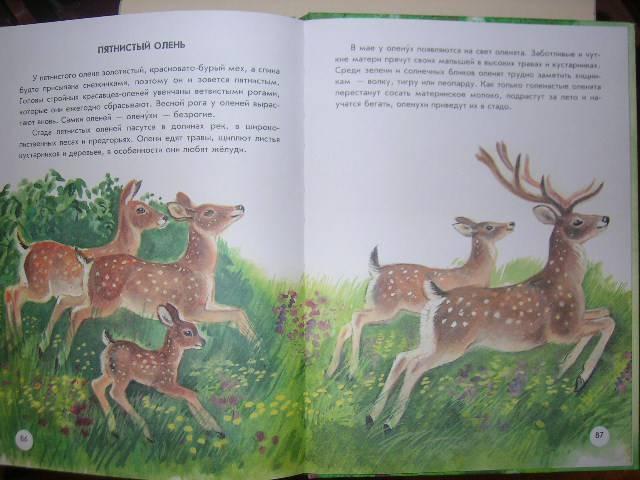 Иллюстрация 40 из 41 для Азбука живой природы - Александр Барков | Лабиринт - книги. Источник: Матюша