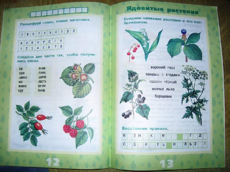 Иллюстрация 17 из 17 для Растения леса - Ольга Тишурина   Лабиринт - книги. Источник: Ирина Викторовна