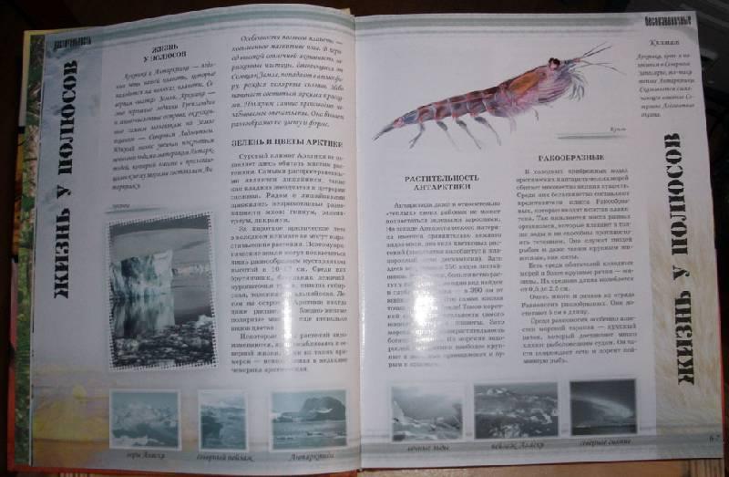 Иллюстрация 1 из 24 для Мир животных - Цеханская, Стрелков | Лабиринт - книги. Источник: Ёжик