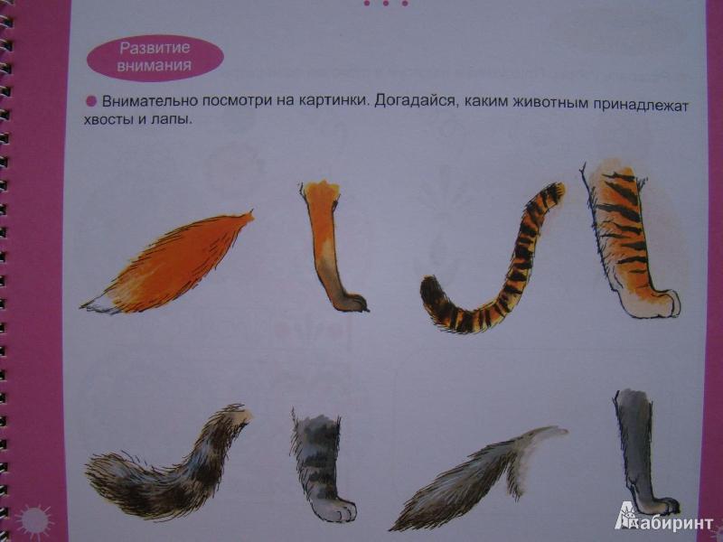 Иллюстрация 14 из 16 для Большая книга заданий и упражнений для детей 4-5 лет | Лабиринт - книги. Источник: Хорошко Елена