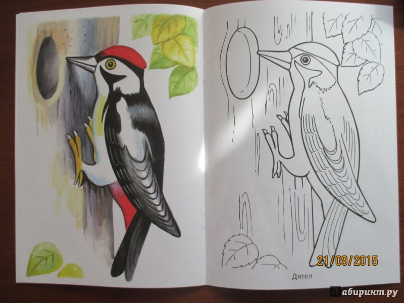 Картинки дятла для детей раскраска