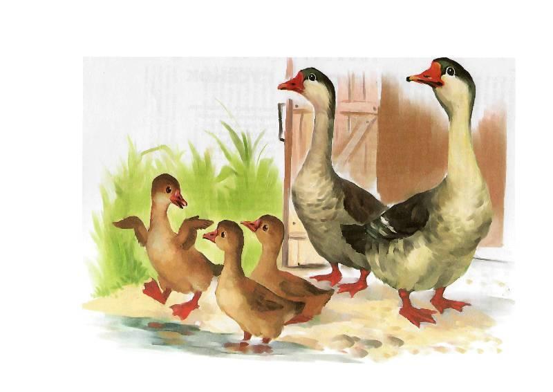 высоко картинки домашние животные и птицы залах горят