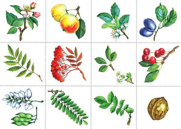 """Иллюстрация 1 из 6 для Развивающее лото """"Плоды и листья"""" для детей от 6 лет - Дарья Денисова   Лабиринт - игрушки. Источник: Фруктовая Леди"""