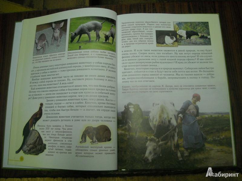 Иллюстрация 47 из 52 для Домашние животные - Светлана Лаврова | Лабиринт - книги. Источник: Лана666