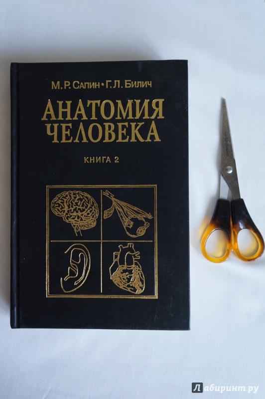 Иллюстрация 1 из 20 для Анатомия человека: Учебник: Книга 2 - Сапин, Билич | Лабиринт - книги. Источник: sakedas