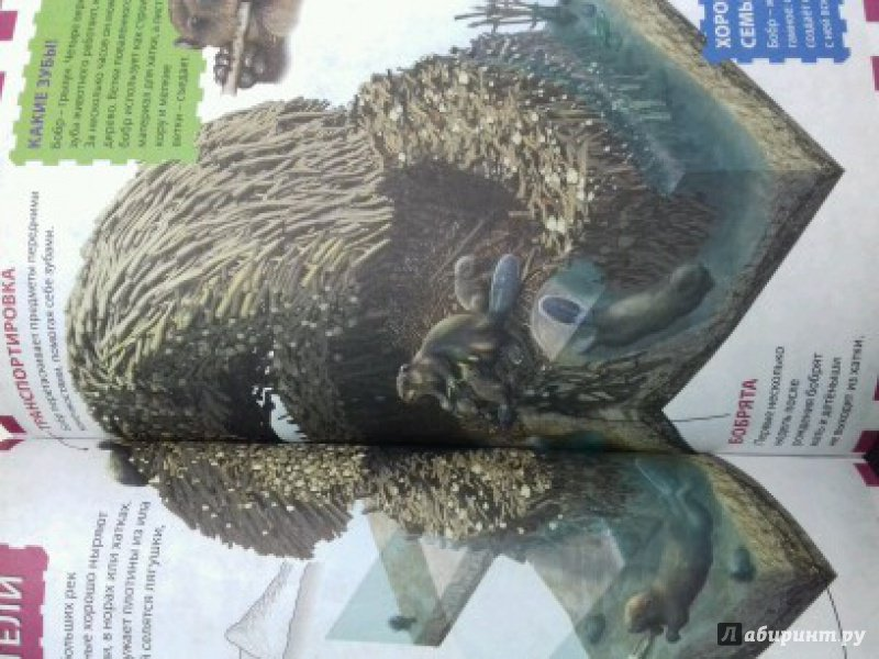 Иллюстрация 7 из 12 для Животные мира | Лабиринт - книги. Источник: ))) Светлана