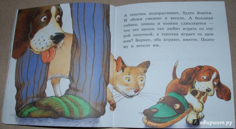 необходимое философские рассказы картинки к ним про собаку коты