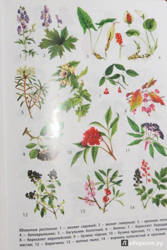 книги ядовитые растения картинки с названиями пространство рассчитано