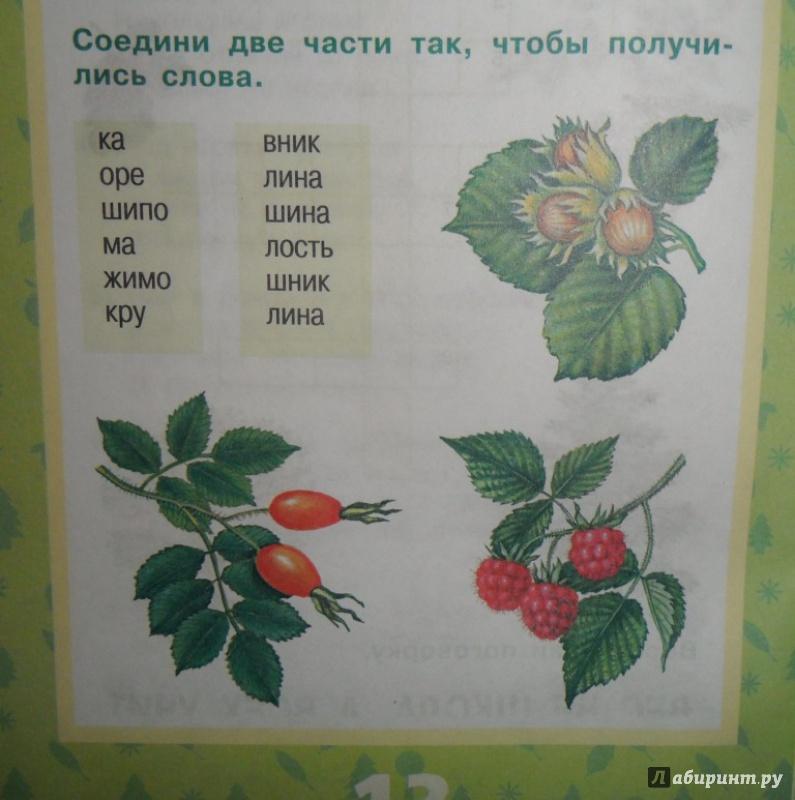Иллюстрация 8 из 17 для Растения леса - Ольга Тишурина | Лабиринт - книги. Источник: Наталья