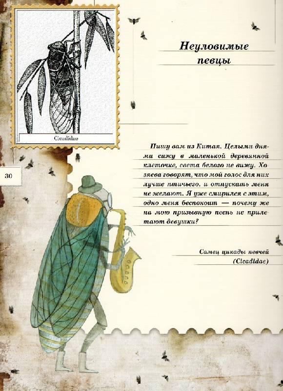 Иллюстрация 101 из 106 для Письма насекомых - Ольга Кувыкина | Лабиринт - книги. Источник: Zhanna