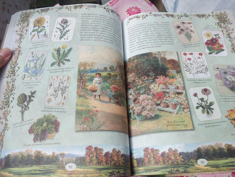 Иллюстрация 34 из 40 для Из Зеленого Царства. Популярные очерки из мира растений - Дмитрий Кайгородов | Лабиринт - книги. Источник: Юлия89