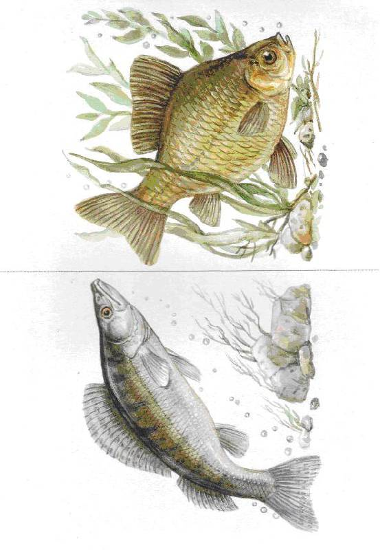 Картотека картинок рыбы