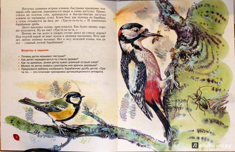 Иллюстрация 12 из 25 для Кто барабанит в лесу? Книга для чтения детям - Александр Тамбиев | Лабиринт - книги. Источник: E.B.