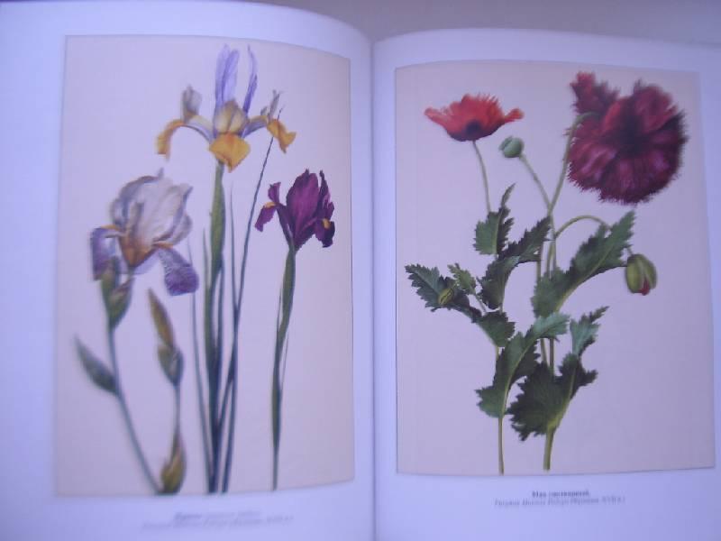 ботаническая энциклопедия растений с иллюстрациями себе