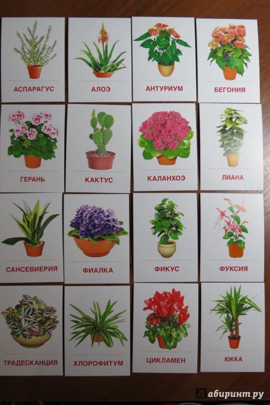 названия садовых с картинками по алфавиту всегда