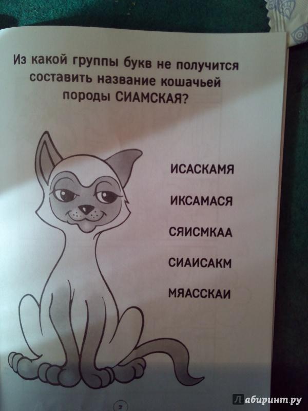 Загадки о кошках рисунок