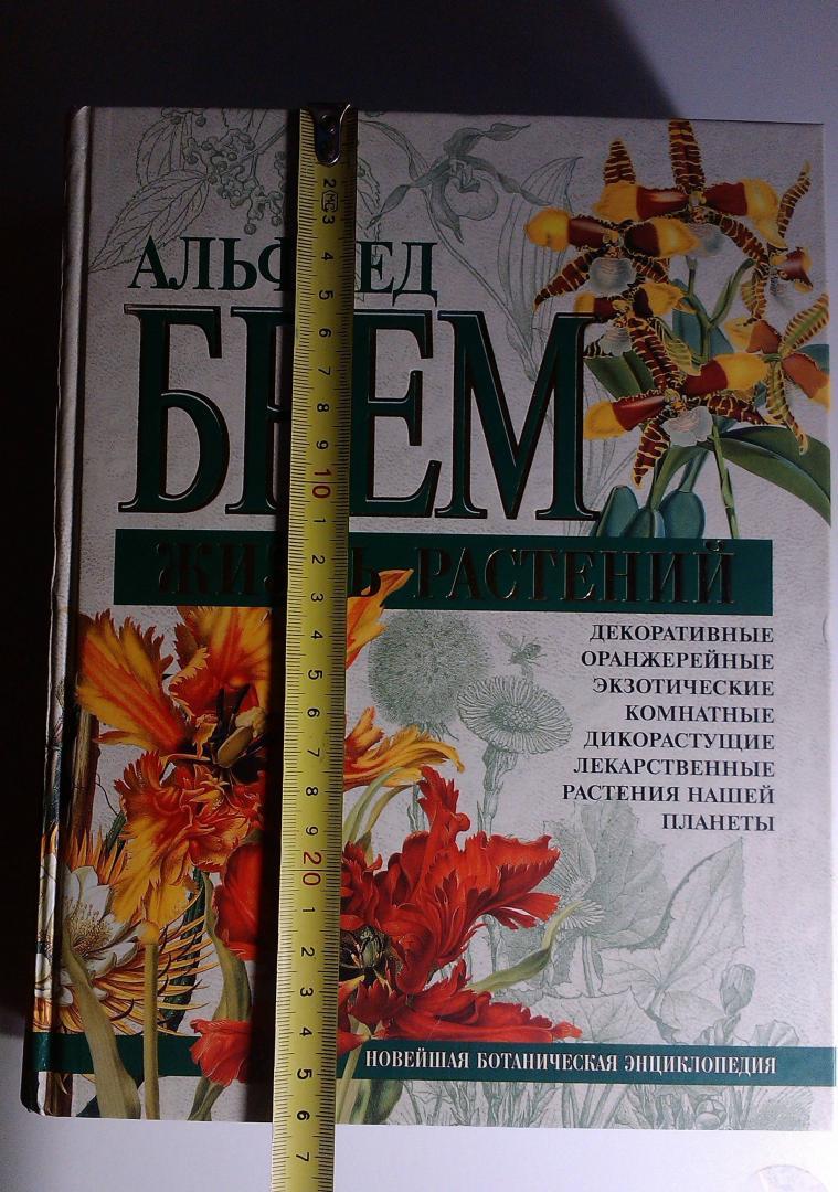 расскажем ботаническая энциклопедия растений с иллюстрациями марка