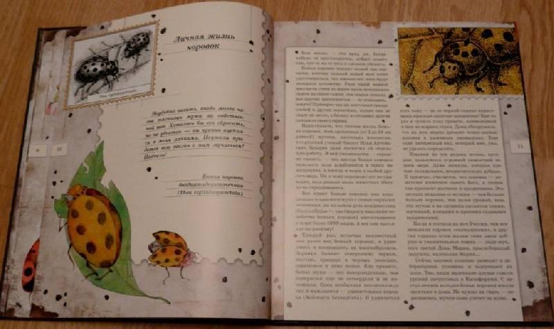 Иллюстрация 9 из 106 для Письма насекомых - Ольга Кувыкина | Лабиринт - книги. Источник: Pam