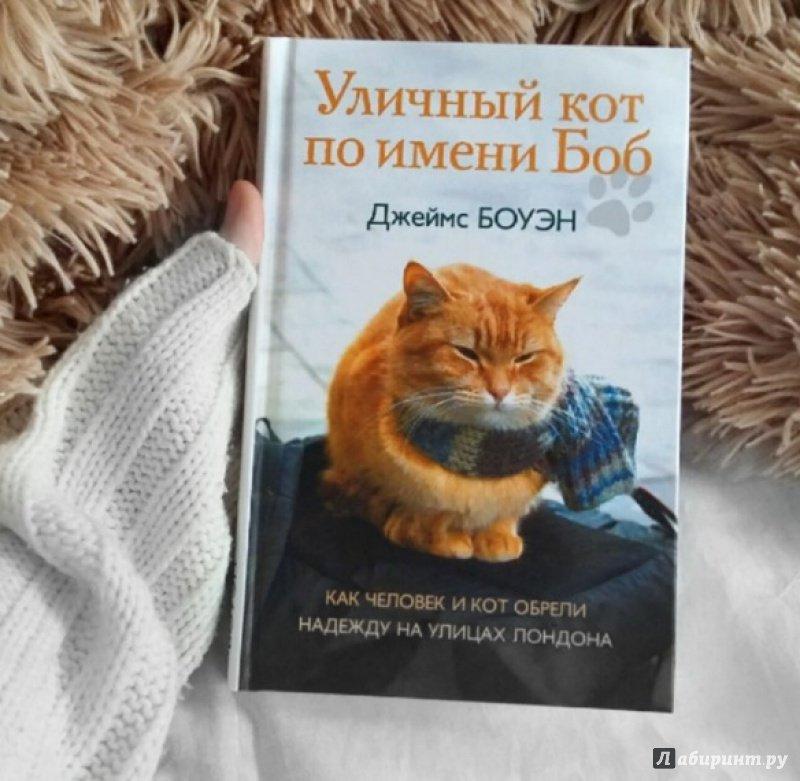Уличный кот по имени боб картинки из книги