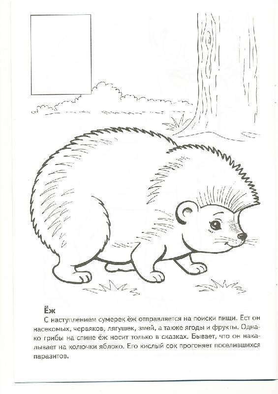 Рисунки животных которые занесены в красную книгу россии совете федерации