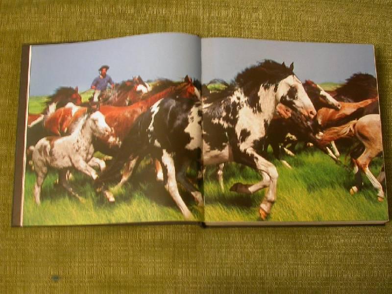 Иллюстрация 18 из 25 для Лошади. Самые лучшие фотографии | Лабиринт - книги. Источник: 3N