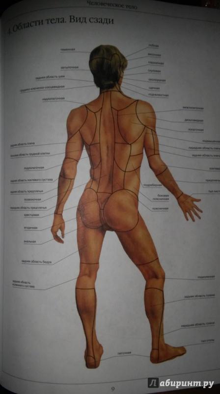 Строение человека в картинках мужчин