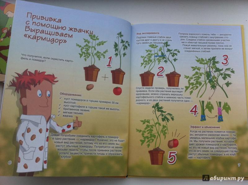 после растения опыты картинки позволяет получать