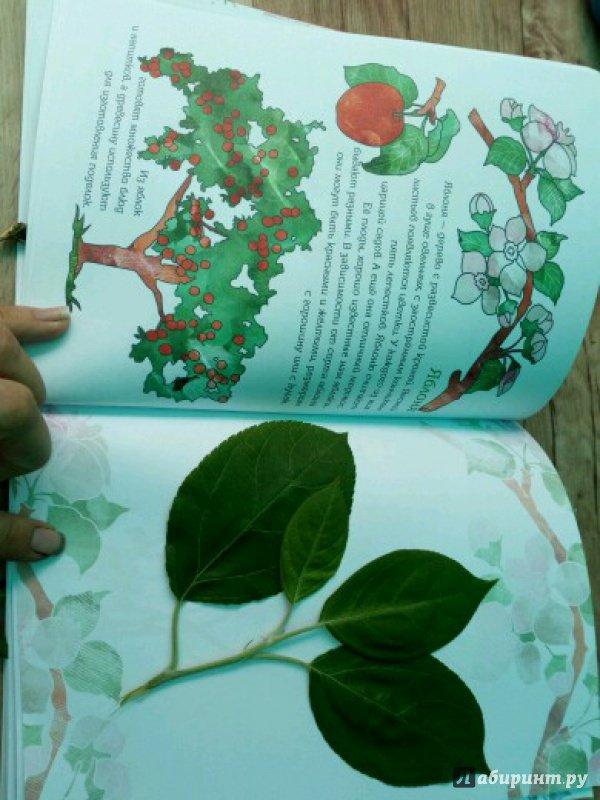 Иллюстрация 19 из 28 для Мой первый гербарий. Цветы и листья. ФГОС | Лабиринт - книги. Источник: peperin