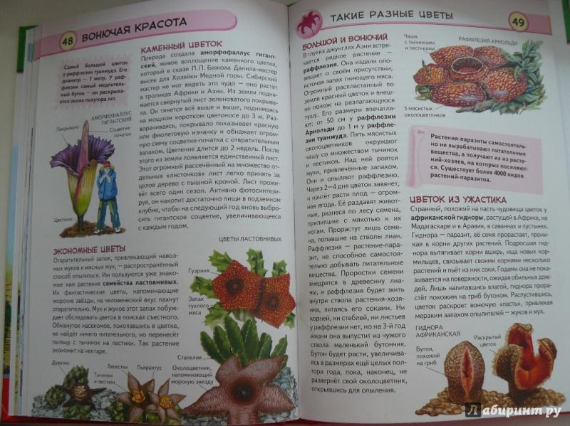 Иллюстрация 12 из 16 для Тропические растения. Удивительная флора жарких стран - Юлия Школьник | Лабиринт - книги. Источник: sv_33