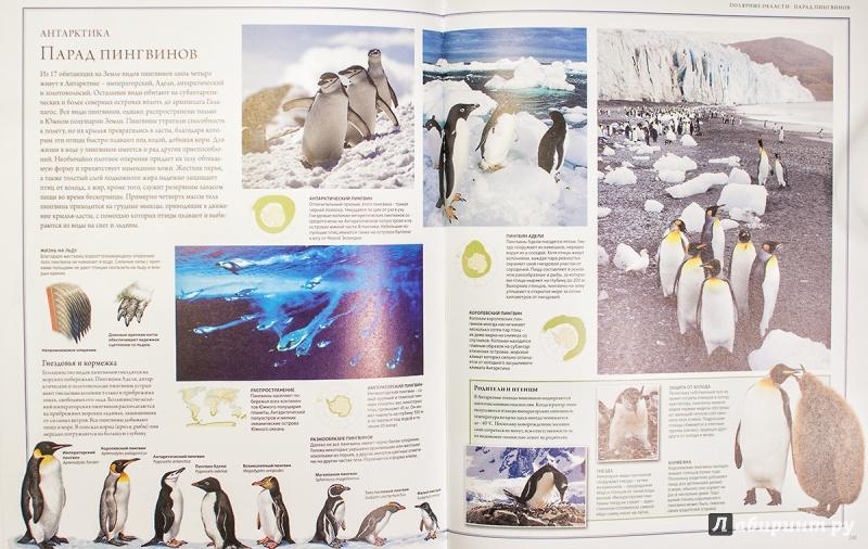 Иллюстрация 19 из 88 для Животный мир. Иллюстрированный атлас - Бамбарадения, Вудрафф, Гинзберг | Лабиринт - книги. Источник: AlexYustas