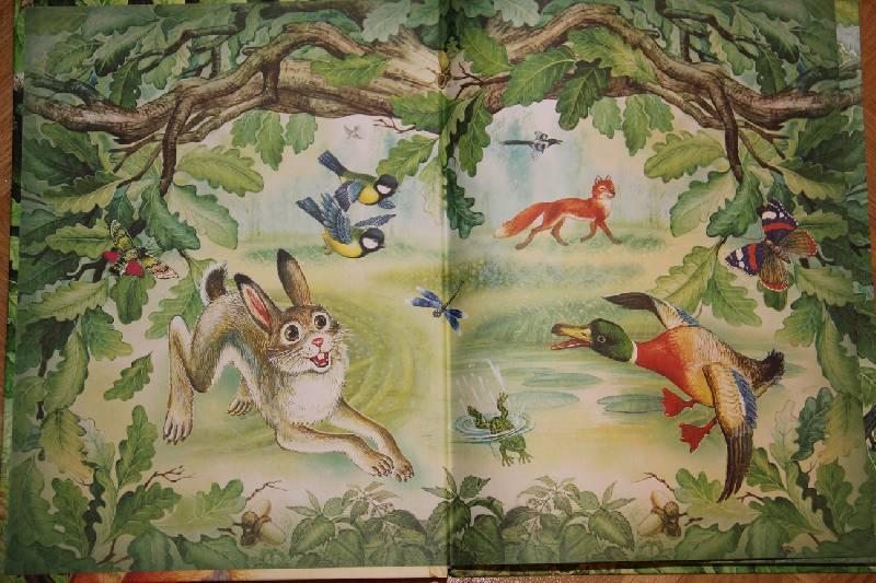 оглядываясь, лесные картинки рассказ лет прекрасный