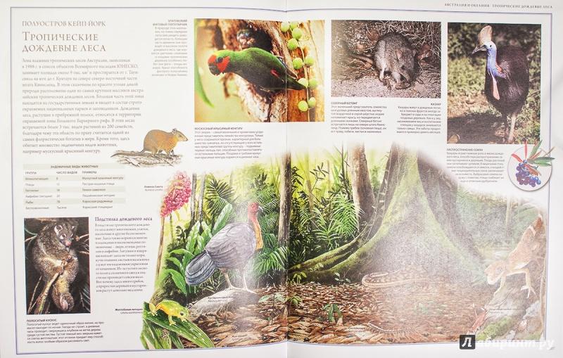 Иллюстрация 16 из 88 для Животный мир. Иллюстрированный атлас - Бамбарадения, Вудрафф, Гинзберг | Лабиринт - книги. Источник: AlexYustas