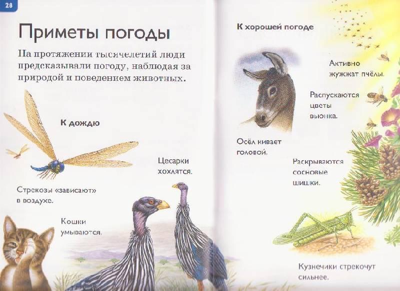 Иллюстрация 7 из 29 для Климат - Дениз Райан   Лабиринт - книги. Источник: Ёжик
