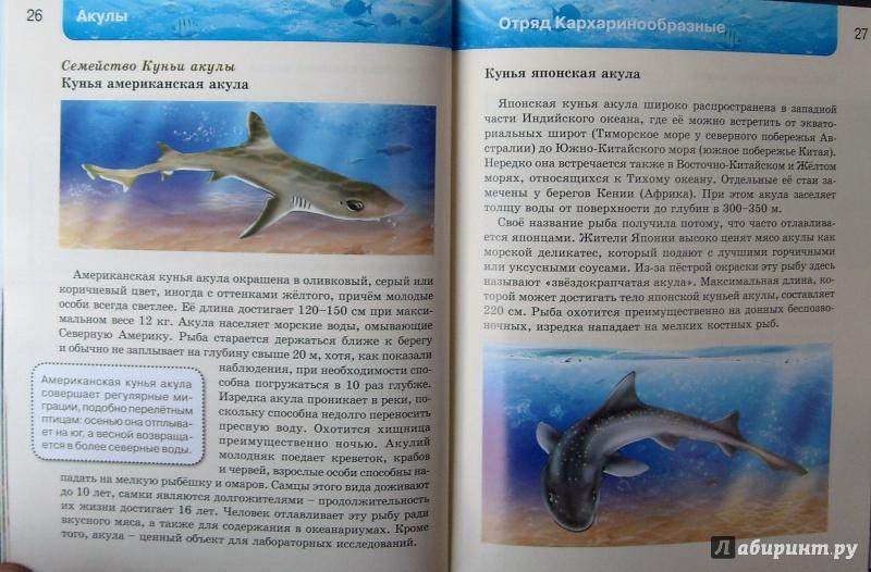 Иллюстрация 17 из 37 для Акулы   Лабиринт - книги. Источник: Соловьев  Владимир