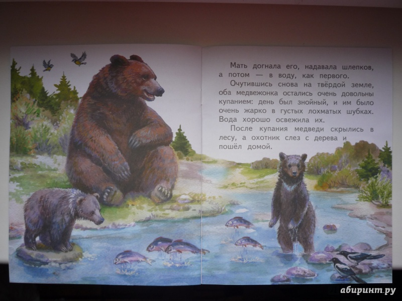 Бианки купание медвежат картинка