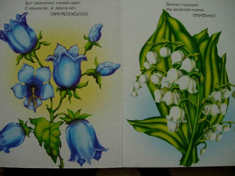 загадки про цветы с картинками проводит