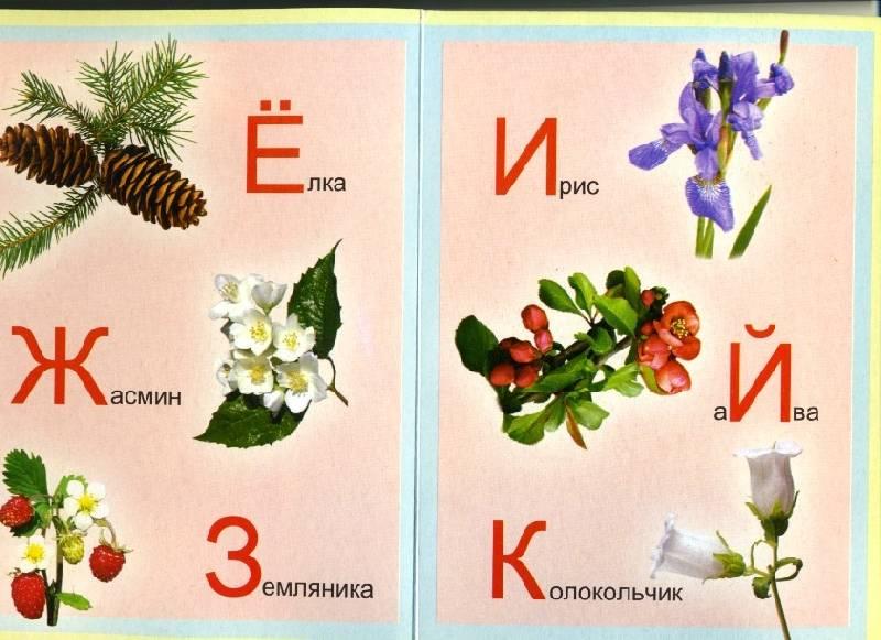 Азбука с растениями картинки