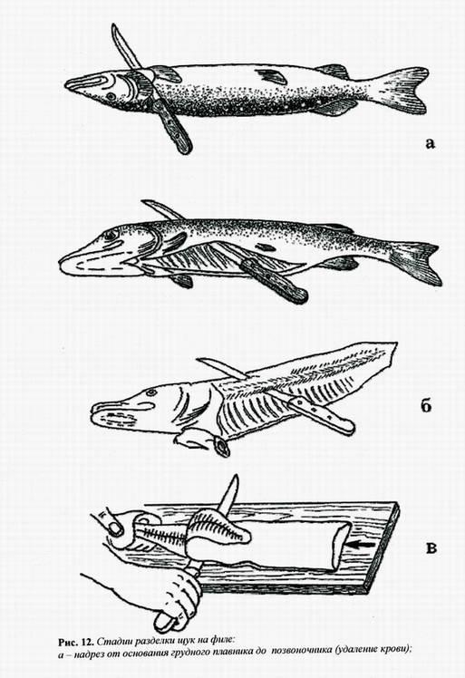 Иллюстрация 1 из 4 для Как сохранить и приготовить рыбу на водоеме и дома - Пышков, Мурашова, Смирнов | Лабиринт - книги. Источник: Panterra