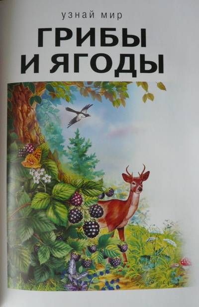 Иллюстрация 23 из 31 для Грибы и ягоды - Сергей Афонькин ...