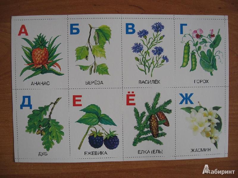 год названия садовых с картинками по алфавиту википедии есть