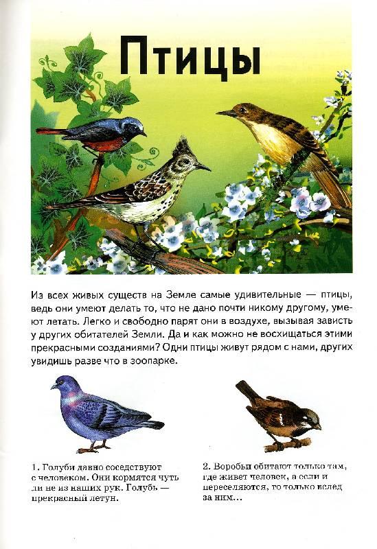 Иллюстрация 1 из 12 для Сборник-2: Птицы, насекомые, животные, динозавры - Бугаев, Александрович, Гришин | Лабиринт - книги. Источник: РИВА