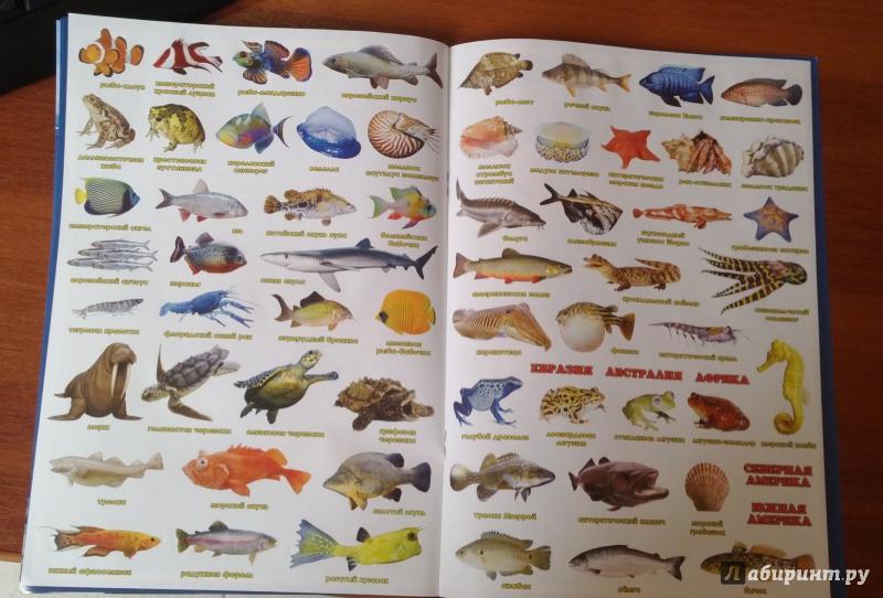 Все рыбы по алфавиту с картинками