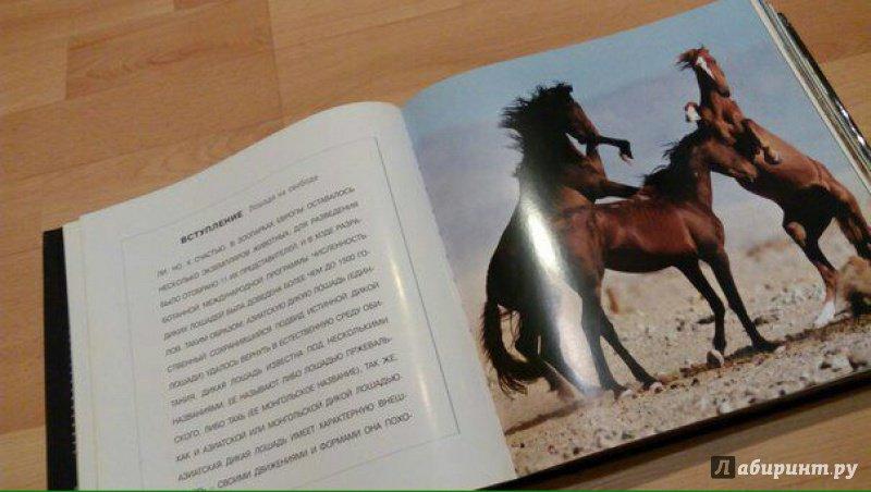 Иллюстрация 2 из 25 для Лошади. Самые лучшие фотографии | Лабиринт - книги. Источник: @СеребряноеТысячелетие