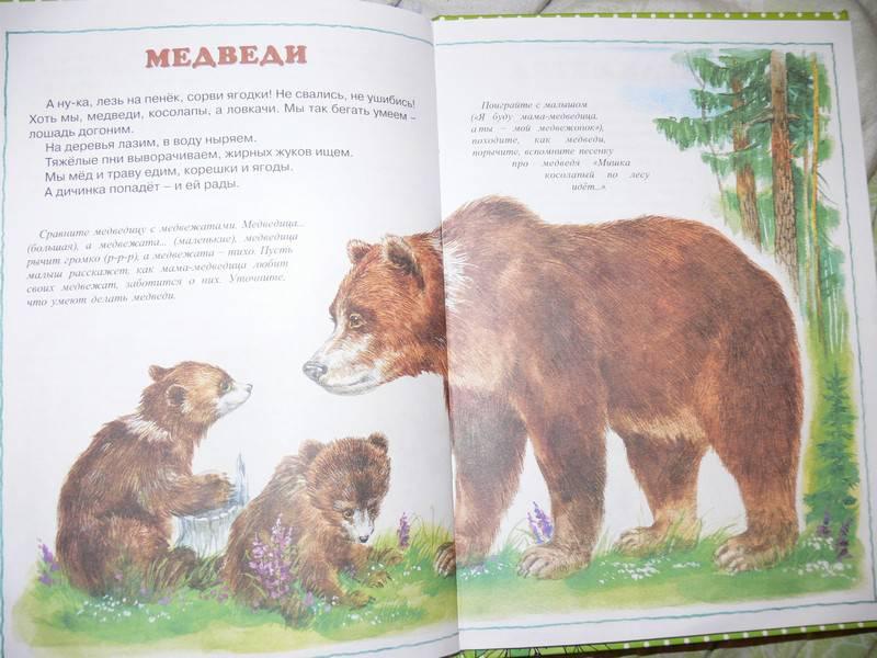 Иллюстрация 10 из 20 для О диких и домашних животных. 2-4 года | Лабиринт - книги. Источник: Irbis