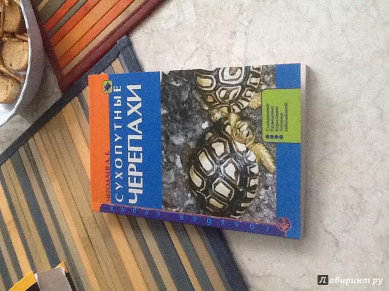 Иллюстрация 2 из 17 для Сухопутные черепахи. Содержание. Разведение. Кормление. Лечение заболеваний - Александр Чегодаев | Лабиринт - книги. Источник: Миронов  Александр Сергеевич